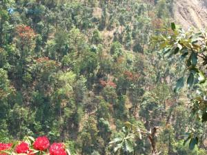 41. forest lovely green