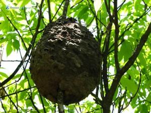 46. Bee hive