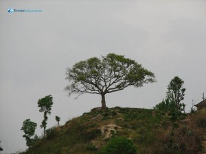 48. Tree on a hill