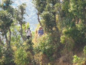 59. jungle difficult terrain