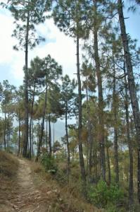 83. pineforestsbeauty