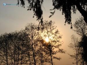 92. simply elegant tree shadows