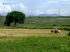 1. Alone in the field