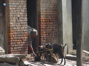 22. Every One works in Khokana