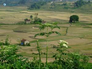 42. Landscape at Khokana 2
