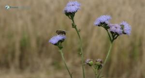 62. Bee