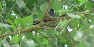 63.Bird