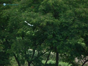 1. Ahha such a beautiful white bird alongside the green trees