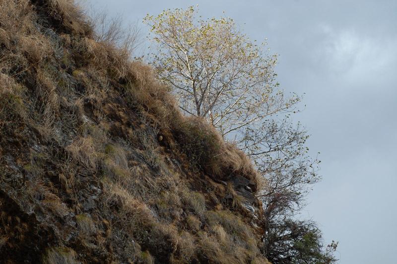 49 tree on the peak