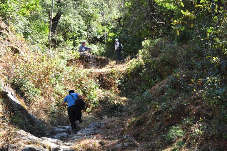 Deerwalk Palung Hike