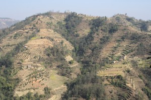 This is the way of cultivation in Stepy Hills
