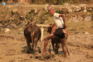 10. Ploughing a field on a hot day..