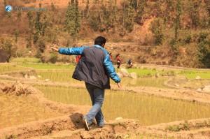 8. Nimesh trying to balance himself through the paddy fields..