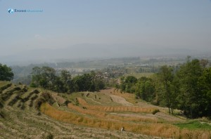18. Barley cultivation