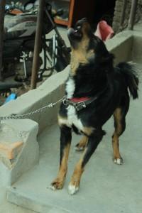 23. Nepali Were-Dog