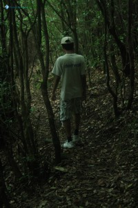 40. Into the Jungle