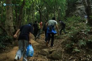 5. Into the jungle