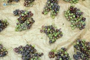 30. Berries