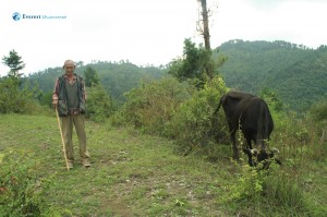 8. Old man and his cattle