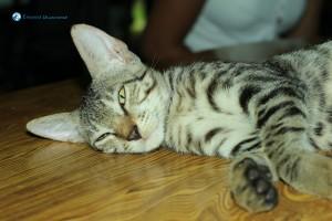 11. Lazy kitty
