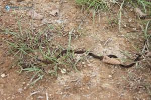 44. Snake