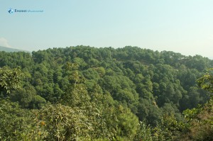 12. Green forest , the wealth of Nepal