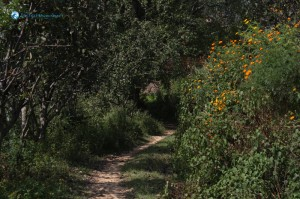 24. Path full of garden
