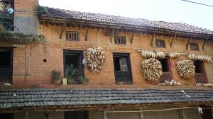 30. Hanging Maizes