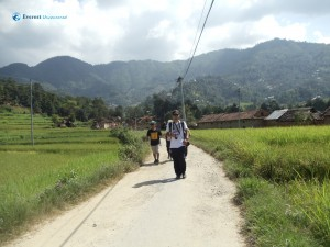 36. Walking along paddy field