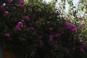 8. Bouquet