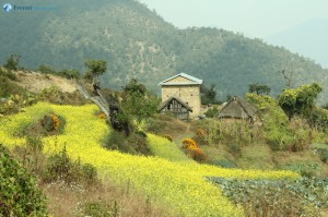 15. Typical Nepali village and mustard field