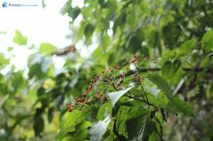 51. Edible berries
