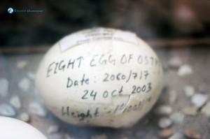 21. Ostrich Egg, Serves 4 for breakfast