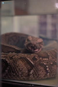 22. Snake in the jar