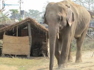 42. Elephant