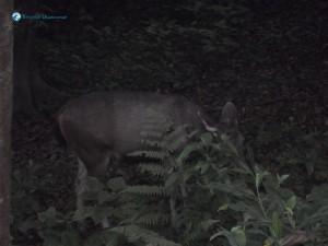 44. Deerwalkers into the wild