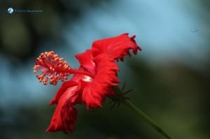68. Flowers bloom
