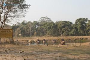 16. Elephant trail