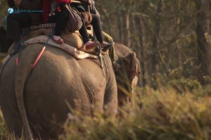 21. Elephant safari
