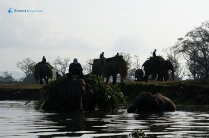 22. Elephant through rapti river