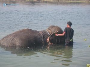 30. Elephant Bath
