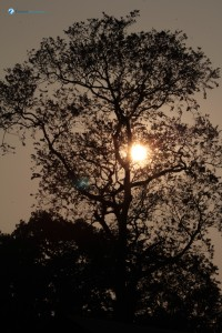 44. The sun hiding