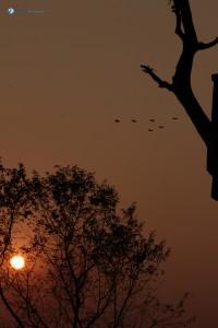 67. Soaring birds