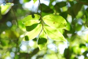 59. Life reflects through leaf