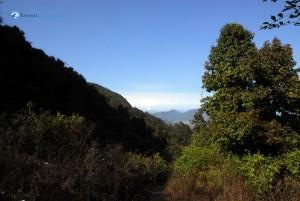 68. Peek a boo, Himalaya.