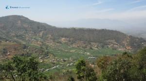 14. Agricultural vista