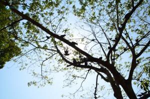 60. Tree of Life