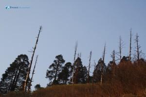 150. Bare Trees