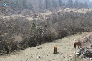 26. High Altitude Pastures