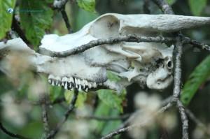 48. Scary Skull